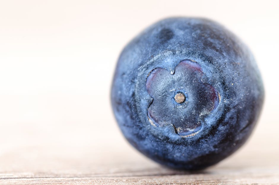 Arándano azul (Vaccinium sp)