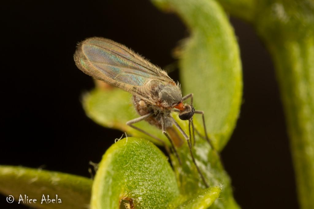 Mosquitos como organismo benéfico
