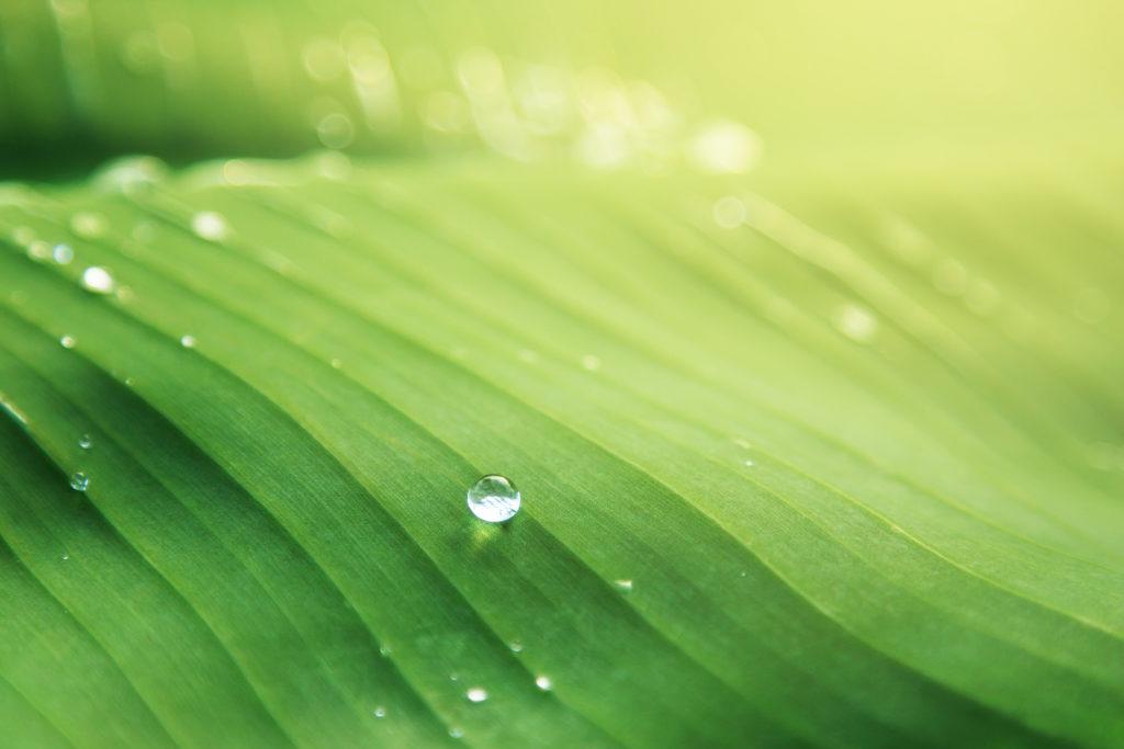 Absorción de nutrientes por las hojas en las plantas