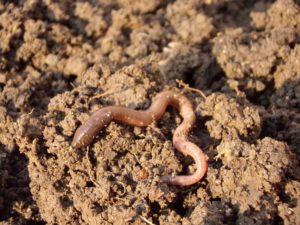 La materia organica del suelo