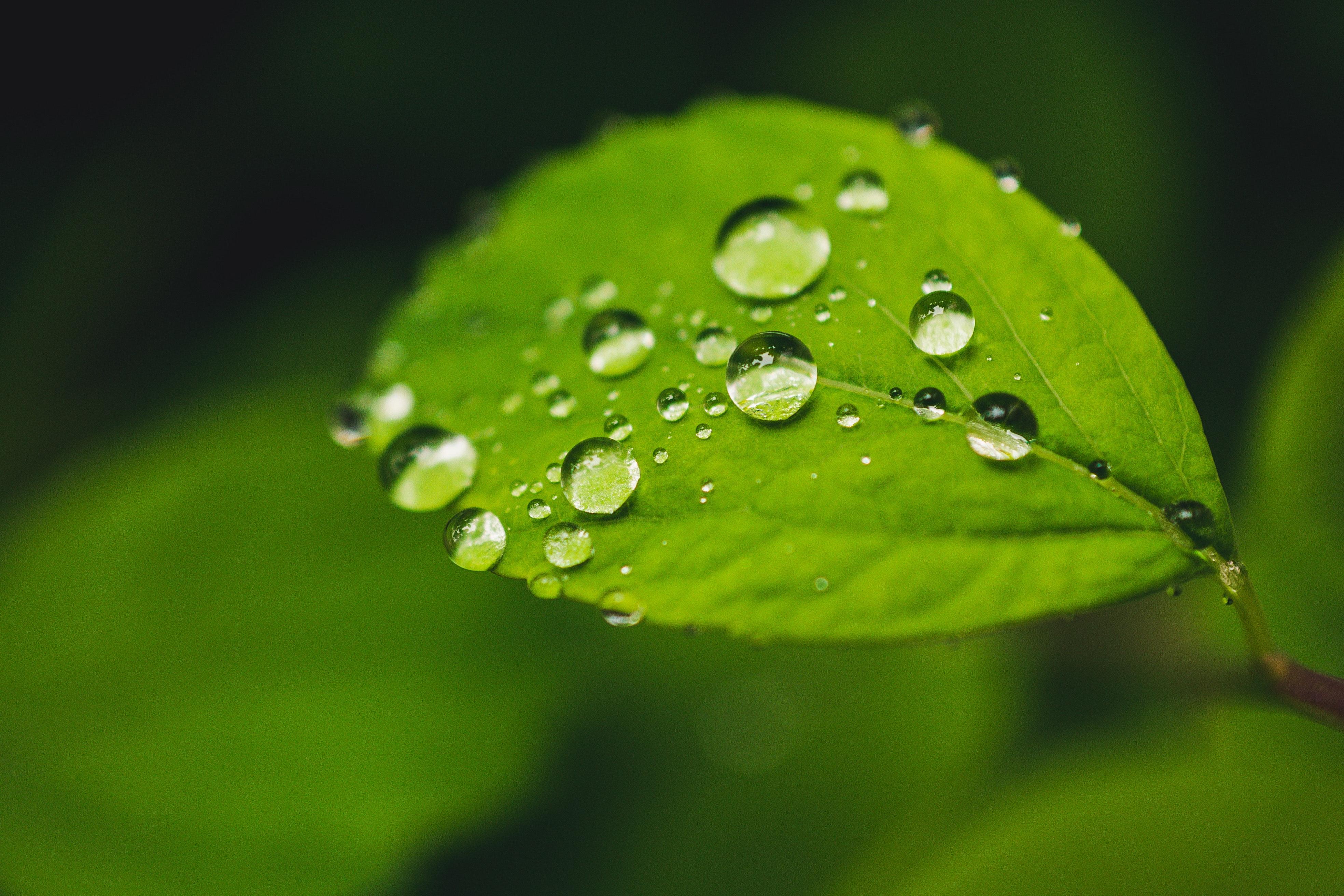 Funciones de los nutrientes en las plantas
