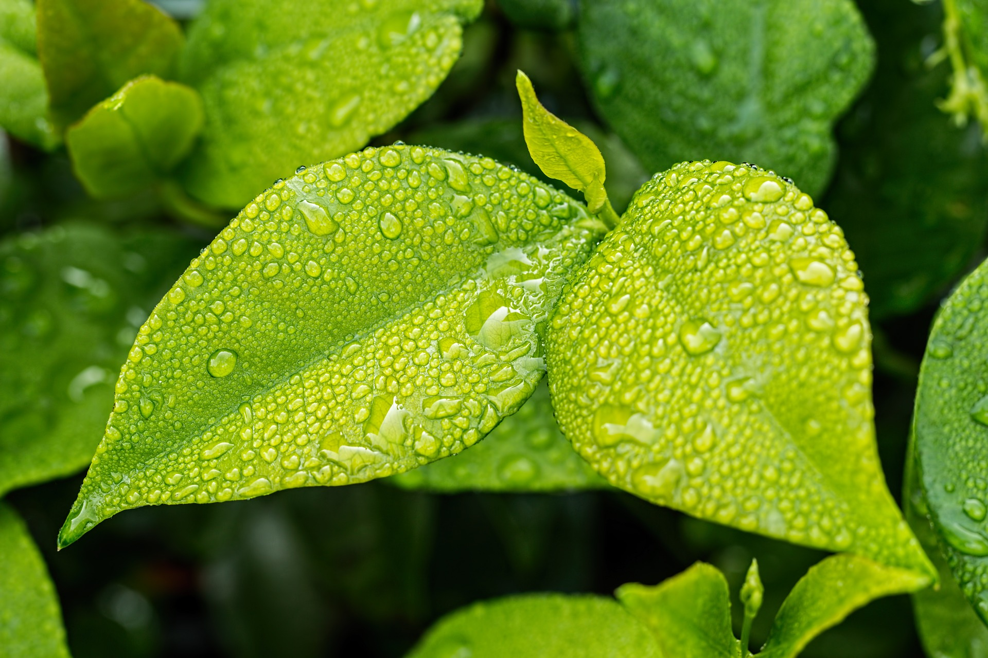 importancia de los nutrientes en las plantas