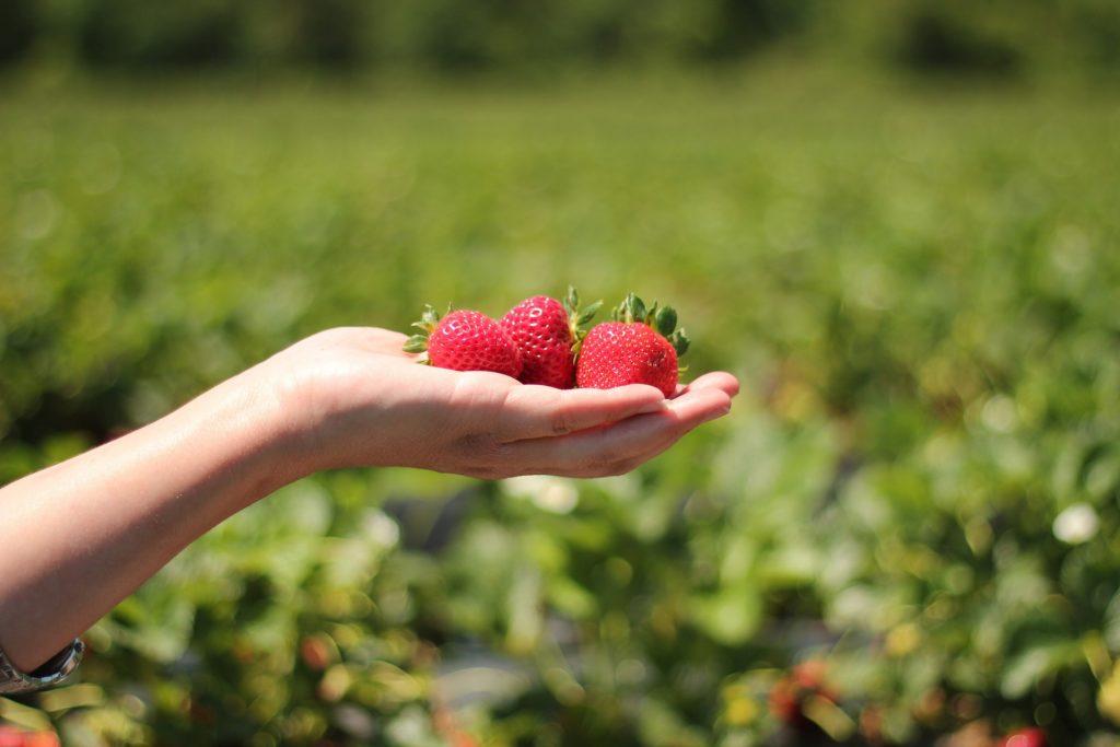 ¿Qué entidad es la principal productora de fresa en México?