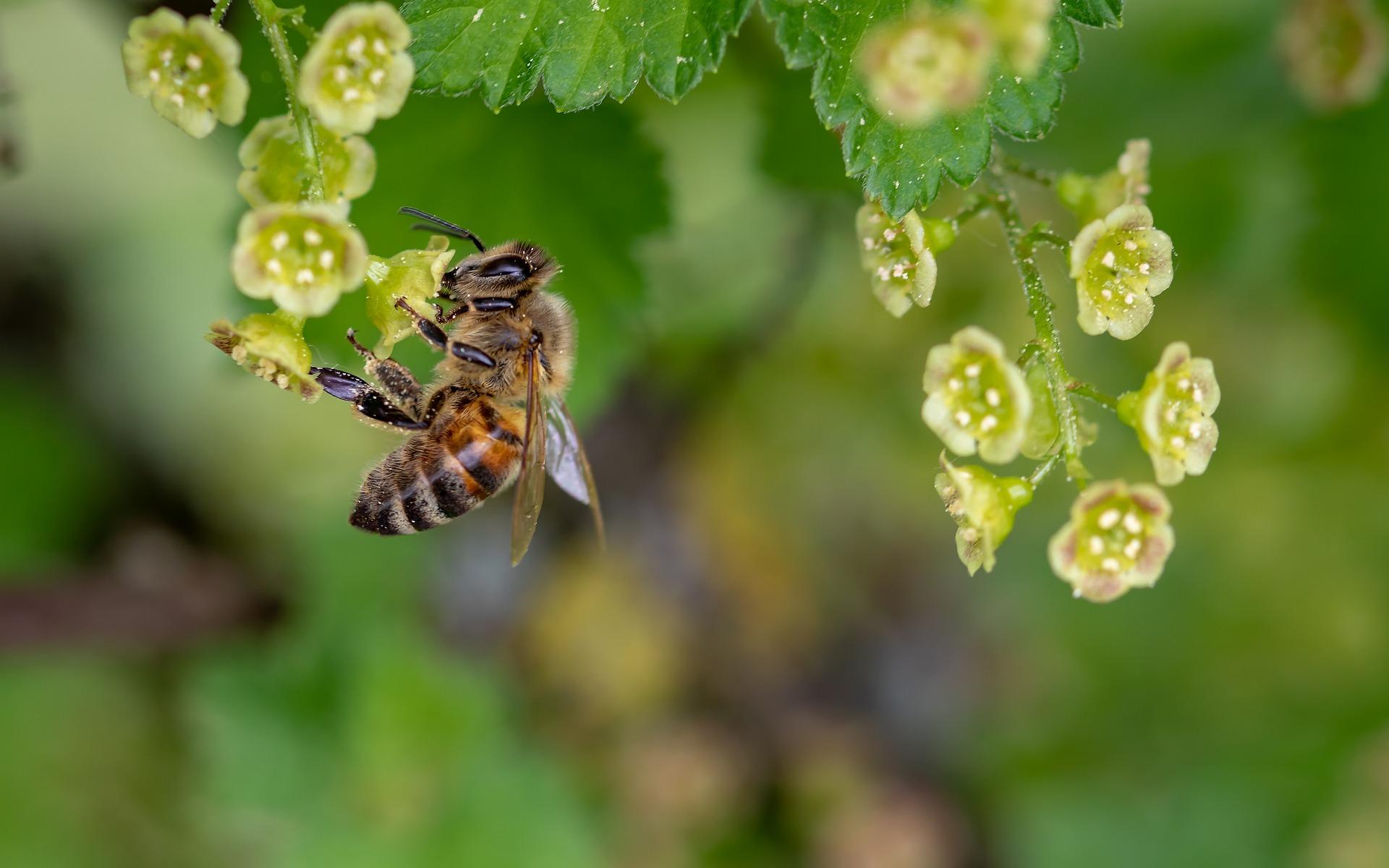 Producción de miel en México