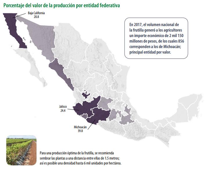 Arándano en México