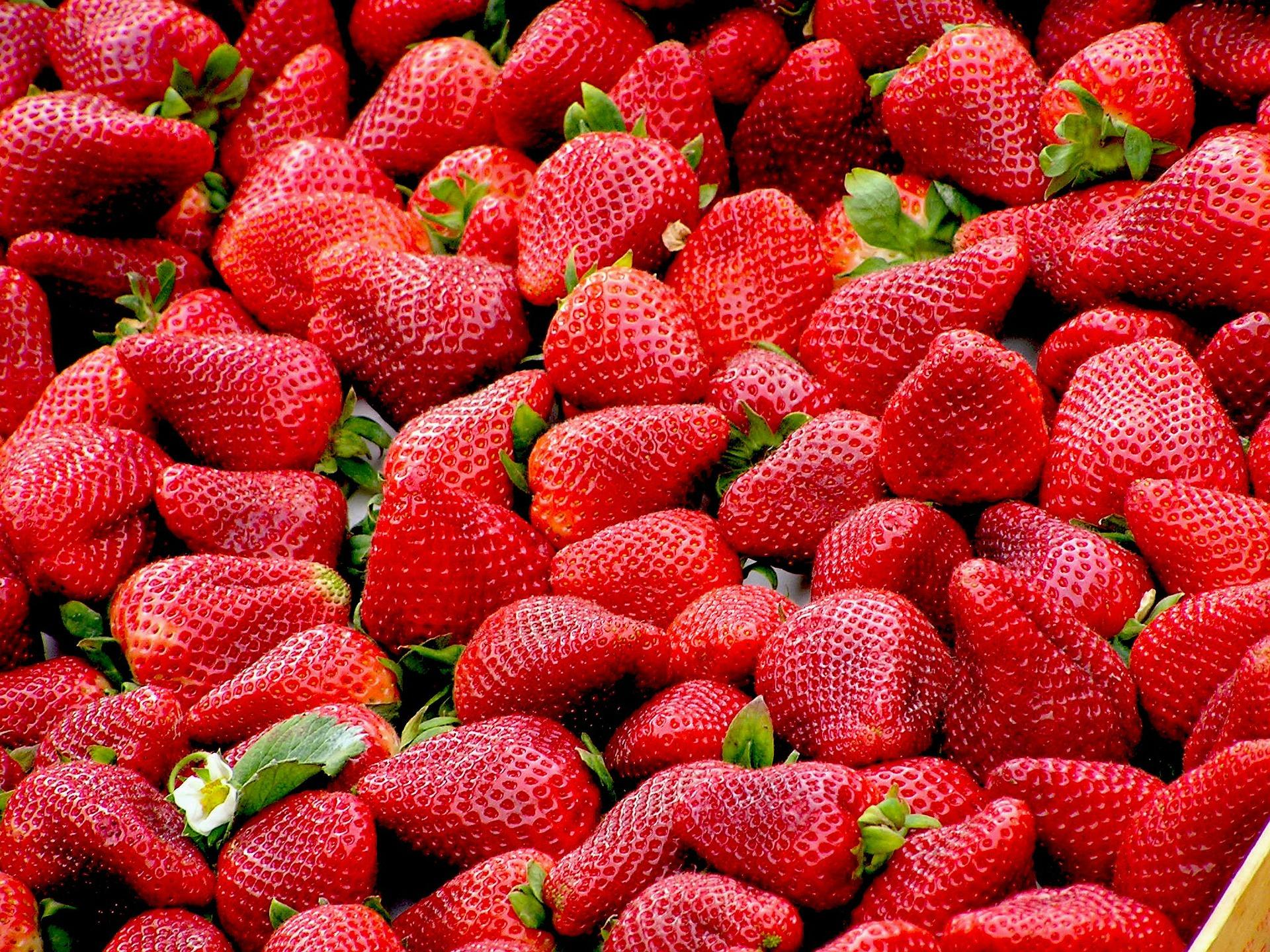 Principal entidad productora de fresa en México