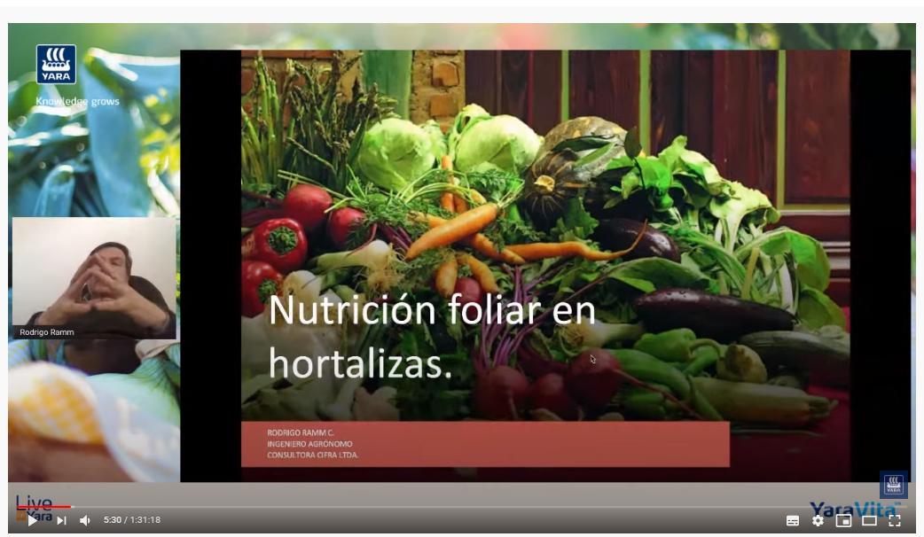 Nutrición foliar con micronutrientes y su impacto en la calidad y producción de cebollas y hortalizas
