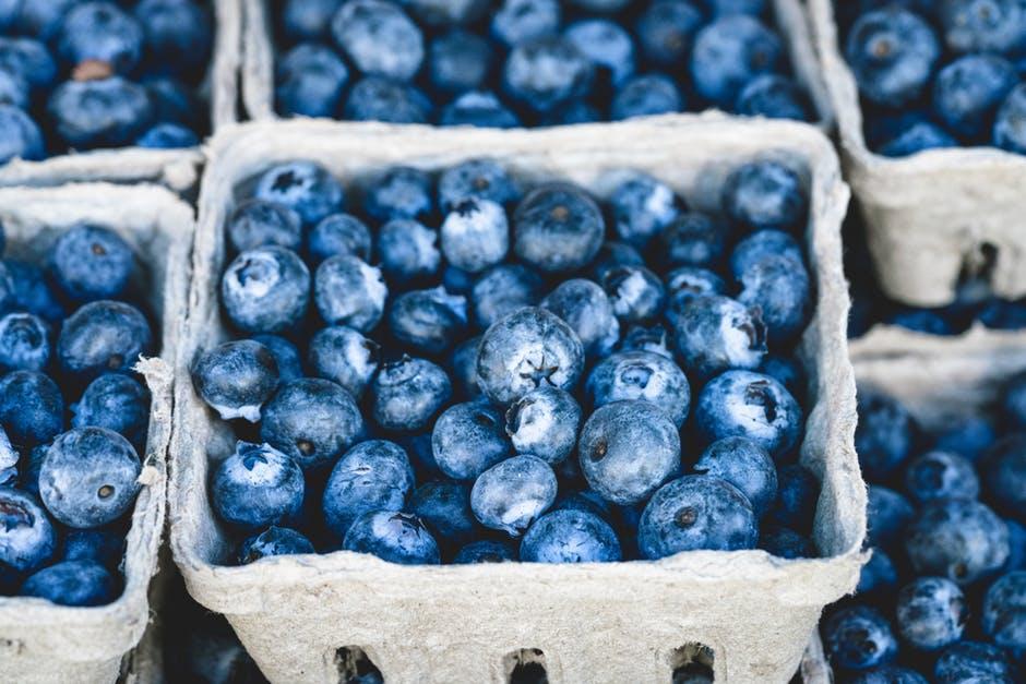 Blueberry (Vaccinium sp)