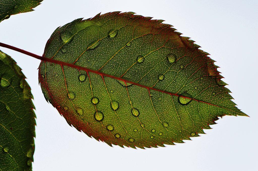 Absorción de nutrientes y transporte de agua en las plantas