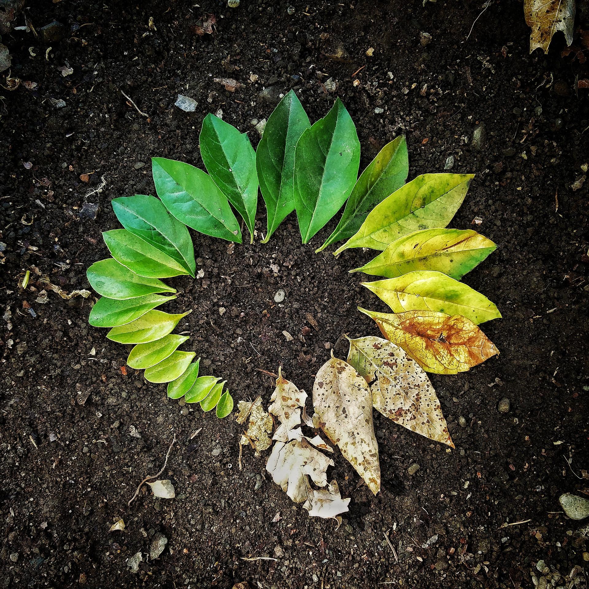 La fenología en las plantas ¿Qué es?
