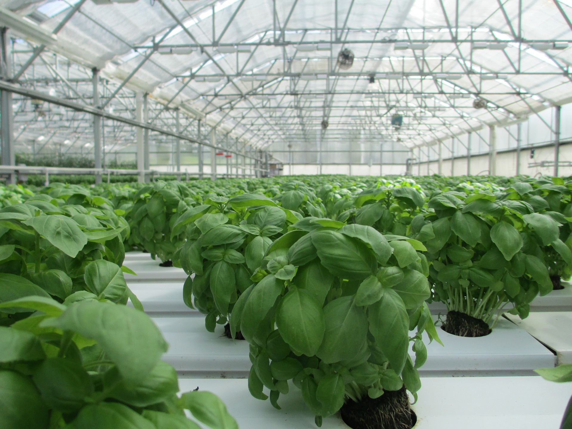 Metabolismo secundario de las plantas