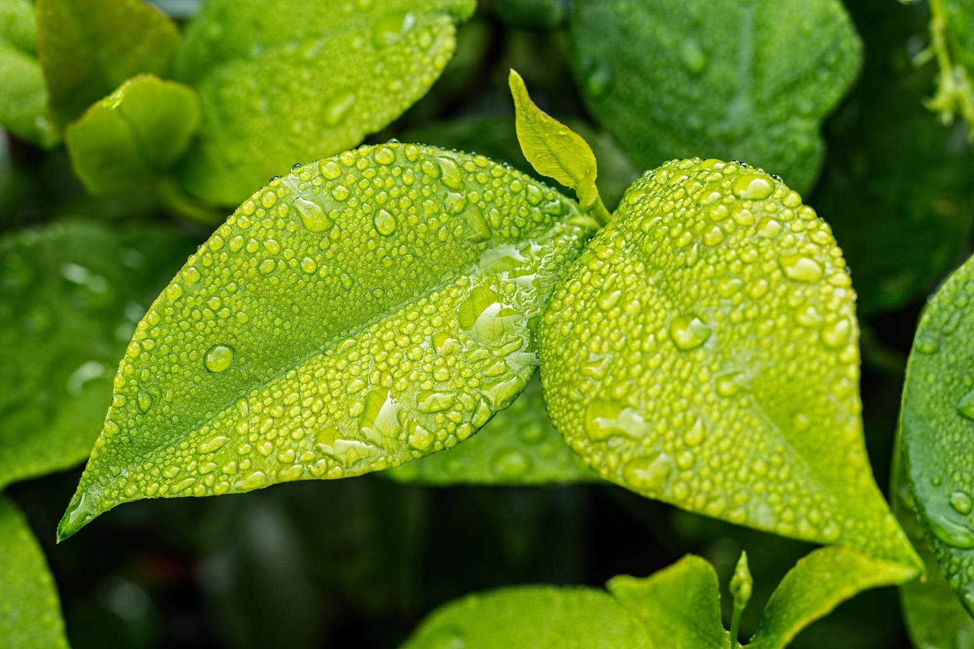 Absorción del magnesio en las plantas