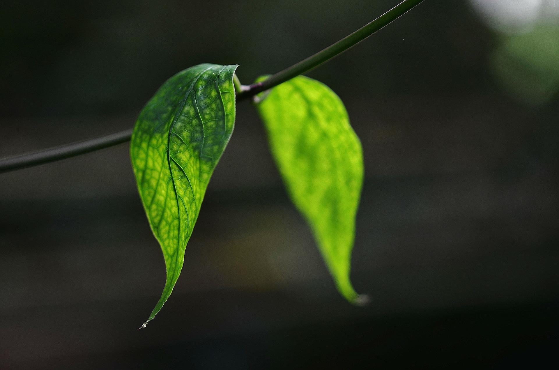 Reguladores del crecimiento vegetal