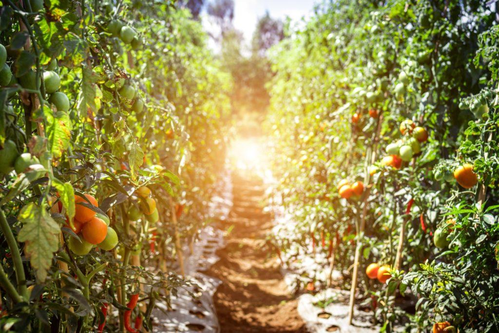 Deficiencias nutricionales en plantas