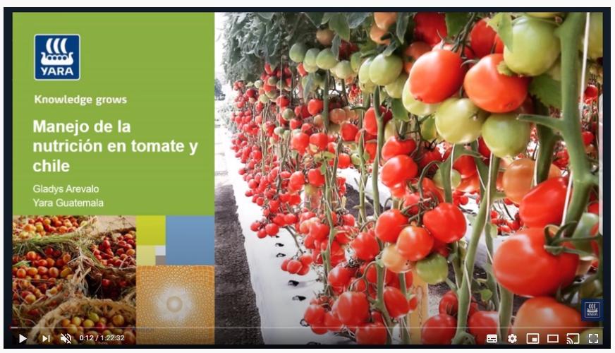 Webinar: Nutrición en tomate
