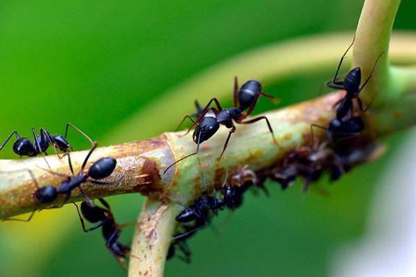 Himenopteros