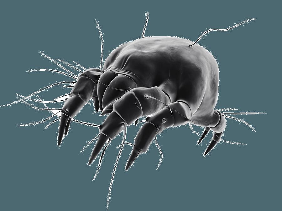 Plaga: ácaro