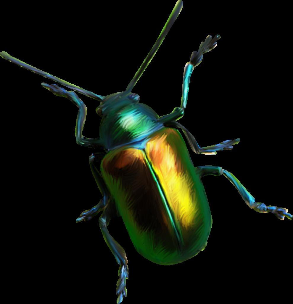 Plagas: Coleópteros